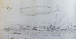 Image from log of the CLARA BELL. Log 16, G.W. Blunt White Library, Mystic Seaport.