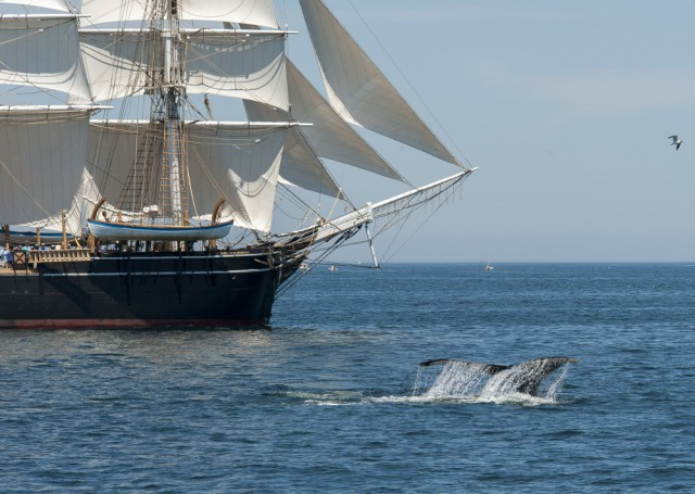 The 1841 whaleship Charles W. Morgan carries a message of conservation and preservation to the Stellwagen Bank National Marine Sanctuary on July 12, 2014.