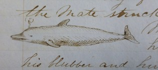 From CLARA BELL logbook. Log 164. G.W. Blunt White Library, Mystic Seaport.