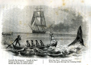 From the 1850 book, The Whale and His Captors.