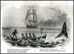From the book The Whale and His Captors. Published in 1850.