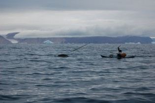 Hunting Narwhals - Photo courtesy of Todd McLeish