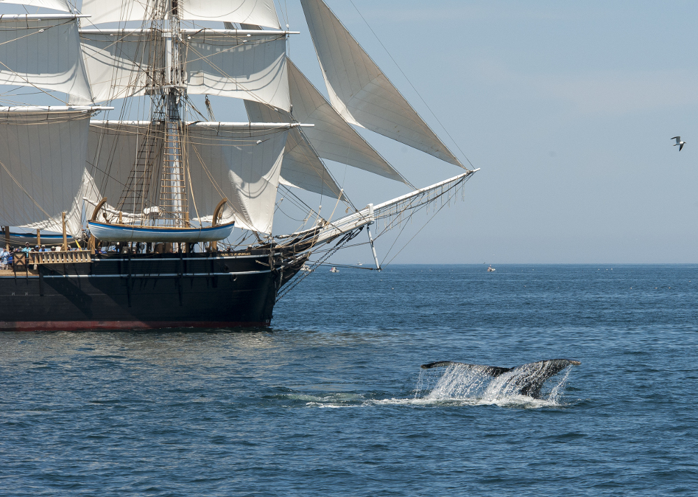 From Whaling to Watching | Mystic Seaport