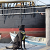 Visit the Mystic Seaport Museum with Your Dog!